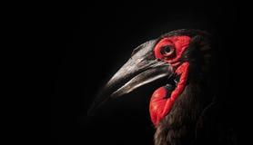染黑鸟 免版税库存图片