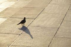 染黑鸟 库存照片