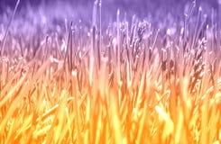 柔光口气,与草的抽象草甸背景在我 图库摄影