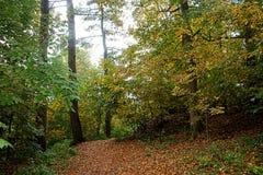柔光通过森林在秋天 免版税图库摄影