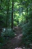 柔和弯曲曲折前进它的方式的供徒步旅行的小道通过有太阳的一个森林在距离沐浴了森林的部分 库存图片