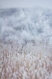 柔和的冬天雪背景 免版税图库摄影