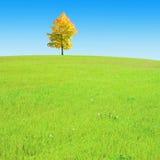 柔和的小山偏僻的结构树 免版税库存图片