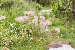 柔和的山开花背景 库存图片