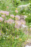 柔和的山开花背景 免版税图库摄影