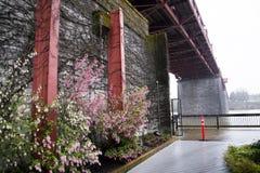 柔和的春天在多雨波特兰 免版税库存照片