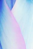 柔和的淡色彩上色了郁金香瓣、软的花卉背景蓝色和别针 图库摄影