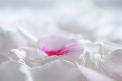 柔和的白花瓣宏指令背景 库存照片