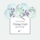 柔和的蓝色葡萄酒花卉贺卡 免版税库存照片