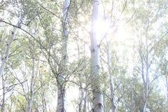 柔和的阳光 库存图片