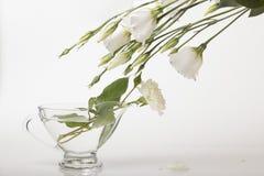 柔软,与白花的静物画 免版税库存图片