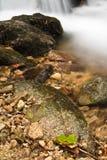 柔滑的流动在有岩石的森林的缎软的河在长的曝光 库存照片