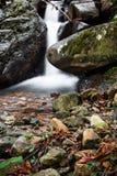 柔滑的缎软的瀑布在有岩石的深森林里在长的曝光 库存图片