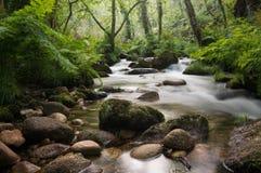 柔滑的水河 库存照片