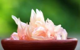 柚子黏浆状物质 库存图片