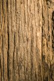 柚木树木头吠声  库存图片