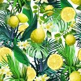 柠檬、花和热带叶子的无缝的样式 免版税图库摄影