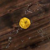 柠檬与在棕色背景飞溅 免版税库存照片