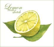 柠檬剪影 库存图片