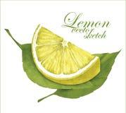 柠檬剪影 免版税库存照片