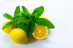 柠檬和薄荷的分支在白色背景, 库存图片