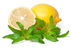 柠檬和蜜蜂花 库存图片