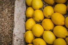 柠檬在地面上安排了在芒通庭院,法国, Fete du Citron里 免版税库存图片