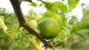 柠檬小食物 免版税库存照片