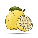 柠檬果子和切片在白色背景 免版税库存图片