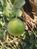 柠檬果子 免版税库存图片