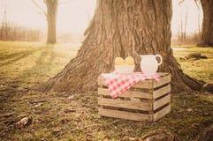 柠檬水在一个老橡树下 免版税库存照片