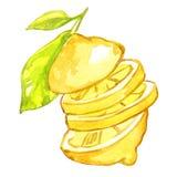 柠檬水彩例证 库存照片