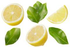 柠檬的汇集结果实与在白色隔绝的叶子 库存图片