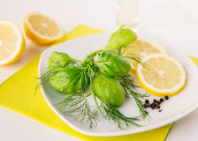 柠檬莳萝蓬蒿选矿 库存图片