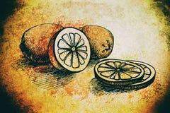 柠檬葡萄酒例证 色的老肮脏的剪影-与古色古香的纹理的柠檬汁和柑橘元素 库存图片