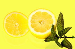 柠檬薄荷 免版税库存图片