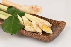 柠檬香茅、非洲黑人石灰叶子和高良姜,使用作为汤 (汤姆薯类) 免版税库存图片