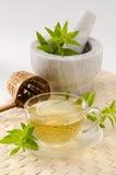 柠檬马鞭草属植物清凉茶 免版税库存图片