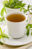 柠檬马鞭草属植物清凉茶 库存图片