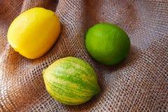 柠檬,西班牙的三种不同类型 库存图片