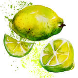 柠檬水彩 免版税图库摄影