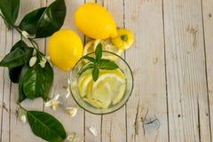 柠檬水用用一棵开花的树装饰的薄菏 图库摄影