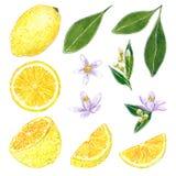 柠檬clipart集合 手拉的水彩例证 库存例证