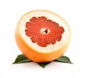 查出叶子成熟切的葡萄柚 免版税图库摄影