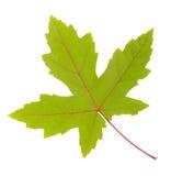 查出的五颜六色的秋天叶子 免版税库存图片