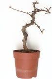 查出的停止的结构树 库存照片