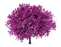 查出的南欧紫荆树白色 免版税图库摄影