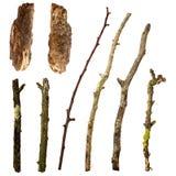 查出的叶子分行灌木集合V 免版税库存照片