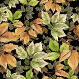 查出的叶子槭树 叶子植物植物园花卉叶子 无缝的背景模式 织品墙纸印刷品纹理 库存照片