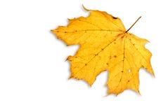 查出的叶子白色 免版税库存图片